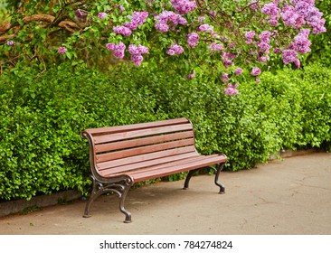 A bench under the lilac tree in the park