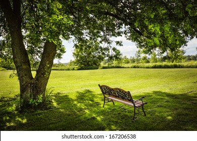 Bench under lush shady tree in summer park