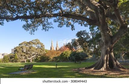 Bench under the tree at the domain park, Royal Botanic Gardens, Sydney, NSW, Australia.