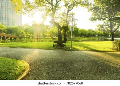 Bench under tree in front of ray of sunrise on morning at park.