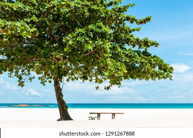 Bench under a tree on a beautiful white sand tropical beach in Bintan Island, Indonesia