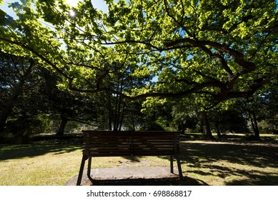 bench under the tree in puplic park
