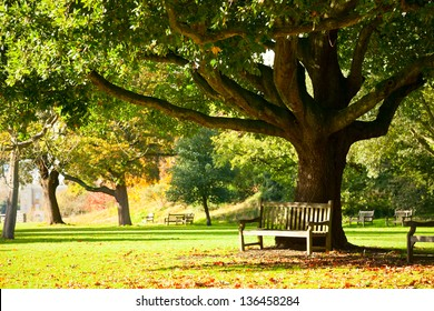 Bench under the tree in the Royal Botanic Gardens in London - Shutterstock ID 136458284