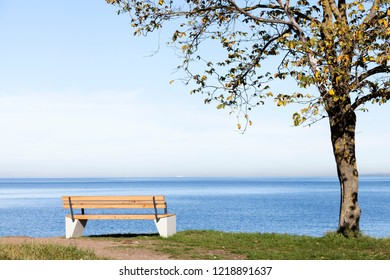 Bench under tree at shore, view over blue sea on sunny autumn day