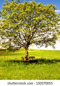 bench under a walnut tree
