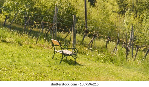 Bench at the vineyard in spring. Spring agriculture background.