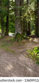 A bench and a wooden table seen in a cedar and fir trees forest.