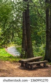 A bench and a wooden table seen in a cedar and fir trees forest. A road seen in the backgroud.