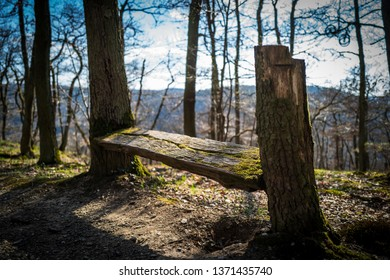 A bench in the woods of Boppard
