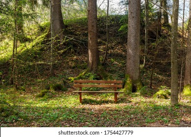 Bench in the woods in spring