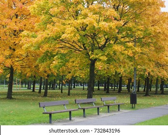 Benches in the beautiful autumn park.