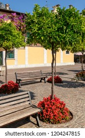benches, flowers and lemon trees on lake side at touristic village on Garda lake, shot in bright fall light at Gargnano, Brescia, Italy
