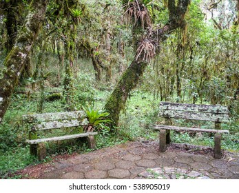 Benches in the jungle