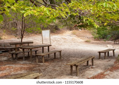 benches under trees for picnicking