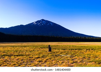 Bend, Oregon -June 30 2019: Mount Bachelor from Sparks Meadow.  The Ski Lodge can be seen on the mountain slope.
