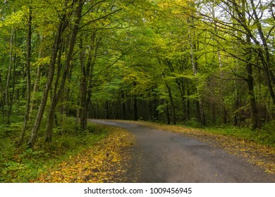 The bend in the road in the autumn forest.