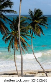 Bended Palmtrees at the beach