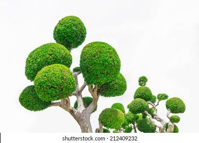 Bending Bonsai Trees.