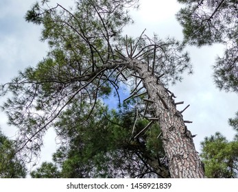 Bending tree with blue sky in the clouds.