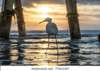 Beneath SunGlow Pier In Florida With Beach Bird Revealing Its Character