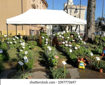 "Benevento, Campania, Italy - May 19, 2018: Plants on display in the town hall for the first edition of the ""Benevento in fiore"" market exhibition"