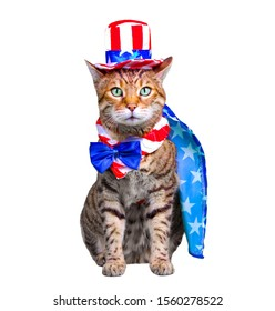 Bengal cat dressed up in 4th of July costume - hat and bow tie, isolated on white background