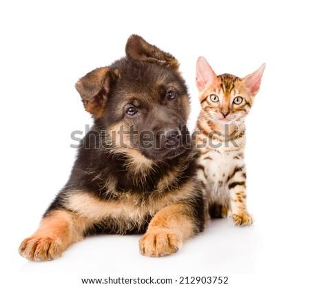 Bengal Cat German Shepherd Puppy Dog Stock Photo Edit Now