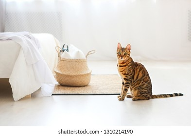 Bengal cat with green eyes in the bedroom in light tones