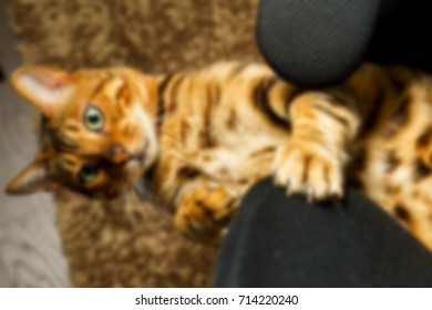 Bengal cat playing on the armchair blurred abstract background blurred abstract background