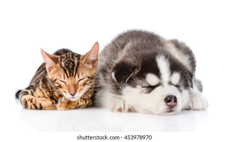 Bengal cat and Siberian Husky puppy sleeping together. isolated on white background