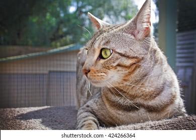 Bengal cat sitting in a catio