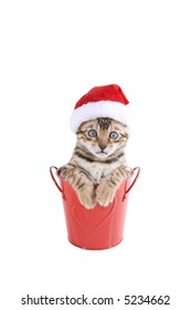 Bengal kitten with Christmas hat on isolated
