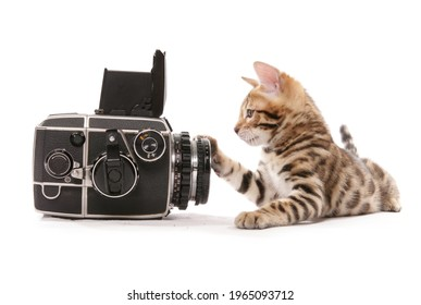 bengal kitten not wanting to be photographed isolated on a white background