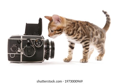 bengal kitten with old camera isolated on a white background