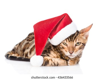 Bengal kitten in red santa hat. isolated on white background