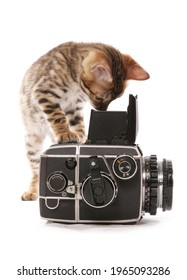 Bengal kitten taking a photograph isolated on a white background