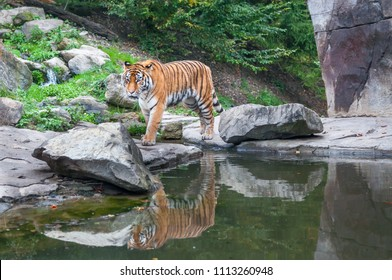 Sundarban Images, Stock Photos & Vectors | Shutterstock