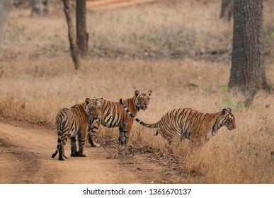 Nagarhole National Park Images, Stock Photos & Vectors