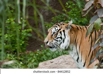 rueckzug-fuer-nepali-tiger-altaere