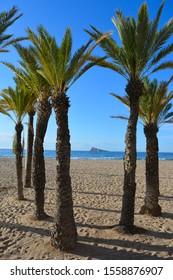 Benidorm Island, a rock outcrop seen through palm trees on Playa Levante Beach on the Costa Blanca, Benidorm, Alicante Province, Spain,