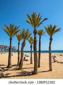 Benidorm, Spain - April 13th 2019: A view of Palm Trees on Levante Beach in Benidorm, Spain.