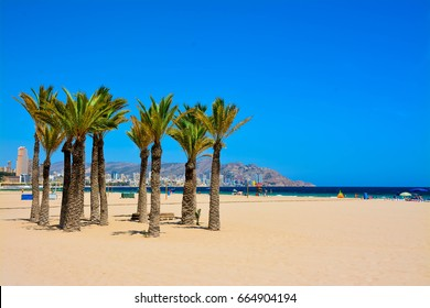 BENIDORM, SPAIN - JUNE 21, 2017: Poniente beach palm trees , Benidorm