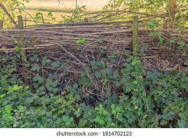Benjes hedge a natural hedge built up by deadwood