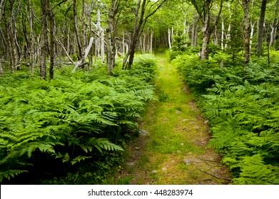 Benji Lake trail in Nova Scotia, Canada