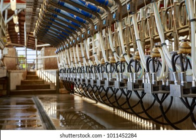 Benon, France - April 14, 2017:Inside view of an automated milking parlor for dairy cows on a small farm. On each side, there are milking machines and stabling.