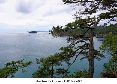 Bent Tree in front of ocean view of Deception Pass State Park Oak Harbor Washington State Clouds Island forest in background