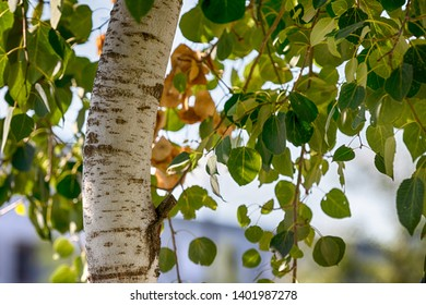 Bent tree trunk with vivid green leaves in sunlight