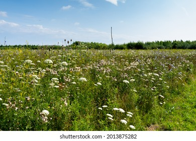In the Bentwoud, Benthuizen, Netherlands is a forest, landscape with wild flowers.