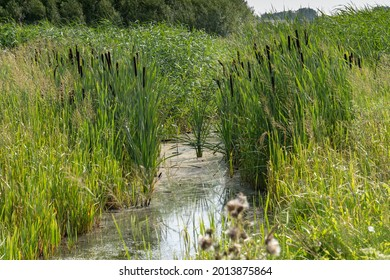 In the Bentwoud, Benthuizen, Netherlands is a forest, landscape with wild flowers and water.