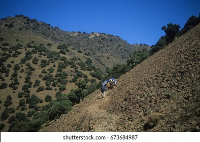 Berber mule drivers on a trail in the High Atlas Mountains mountains of Morocco